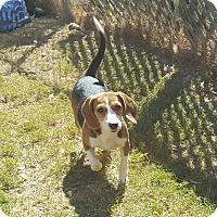 Adopt A Pet :: Betsy - Byhalia, MS