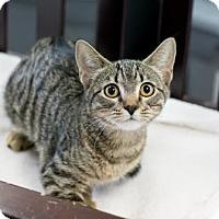 Adopt A Pet :: Molli - Fountain Hills, AZ