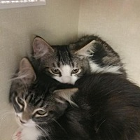 Adopt A Pet :: Sal & Sara - Walnut Creek, CA