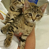 Adopt A Pet :: Cheetah & Monty - Knoxville, TN