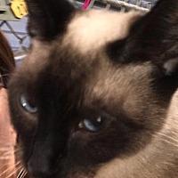 Adopt A Pet :: Honey - Lagrange, IN