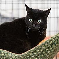 Adopt A Pet :: Regina - Fallbrook, CA