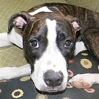 Adopt A Pet :: Gretel - Cincinnati, OH