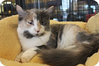 Domestic Longhair Cat for adoption in Smyrna, Georgia - Sophie