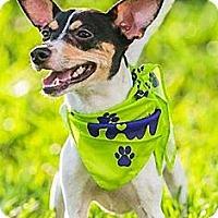 Adopt A Pet :: Petey Linguini - Jacksonville, FL