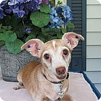 Adopt A Pet :: Peaches - Warwick, NY