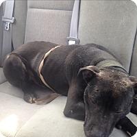 Adopt A Pet :: Rocky - East McKeesport, PA