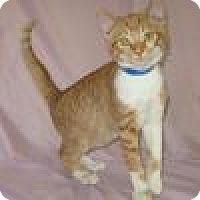 Adopt A Pet :: Julian - Powell, OH