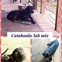 Adopt A Pet :: Gwen - Bogalusa, LA