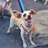Adopt A Pet :: Cody - Yuba City, CA