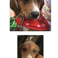 Adopt A Pet :: Eliza - Patterson, NY