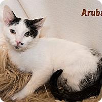 Adopt A Pet :: Aruba - San Juan Capistrano, CA