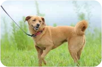 Terrier (Unknown Type, Small) Mix Dog for adoption in Franklin, Indiana - Missy