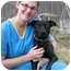 Photo 2 - Labrador Retriever/Retriever (Unknown Type) Mix Dog for adoption in Olive Branch, Mississippi - Miracle on the Hudson