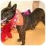 Photo 2 - Dutch Shepherd Mix Dog for adoption in Cincinnati, Ohio - Bridge