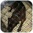 Photo 2 - Labrador Retriever/Mastiff Mix Dog for adoption in Bristol, Rhode Island - Summer