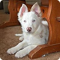 Adopt A Pet :: Hale - Glenrock, WY