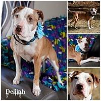 Adopt A Pet :: Delilah - Sioux Falls, SD