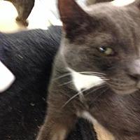 Adopt A Pet :: Kashmir - Fresno, CA