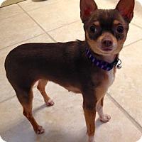 Adopt A Pet :: Emmy - Gainesville, FL