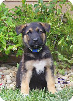 German Shepherd Dog Mix Puppy for adoption in Thousand Oaks, California - Michael von Rosie
