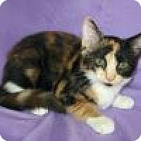 Adopt A Pet :: Zora - Powell, OH