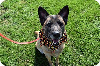 Shepherd (Unknown Type) Mix Dog for adoption in Washington, Pennsylvania - Duchess