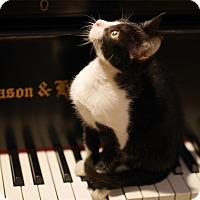 Adopt A Pet :: Arthur - N. Billerica, MA