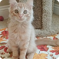 Adopt A Pet :: Sully - North Highlands, CA
