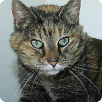Adopt A Pet :: Pipsqueak - Grass Valley, CA
