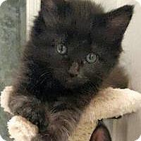 Adopt A Pet :: Satin - Duluth, GA