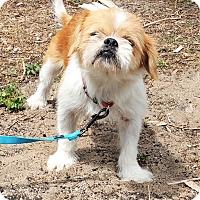 Adopt A Pet :: Riley - Tavares, FL