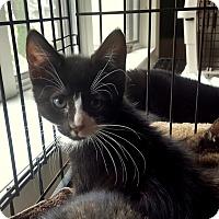 Adopt A Pet :: Gibbs - Berkeley Hts, NJ