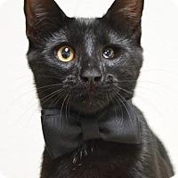 Adopt A Pet :: Apollo - Dublin, CA