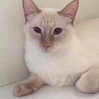 Adopt A Pet :: Garfunkel - San Leon, TX
