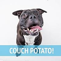 Adopt A Pet :: Tonya - Decatur, GA