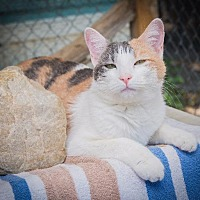 Adopt A Pet :: Arielle - Corinne, UT