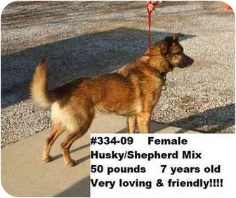 Shepherd (Unknown Type)/Husky Mix Dog for adoption in Zanesville, Ohio - # 334-09 - ADOPTED!