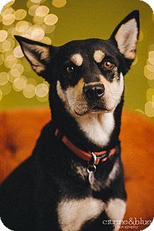 German Shepherd Dog Mix Dog for adoption in Portland, Oregon - Shasta