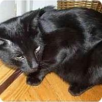 Adopt A Pet :: Zeke - Jenkintown, PA