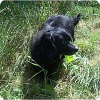 Adopt A Pet :: Blackie ADOPTION PENDING! - Antioch, IL