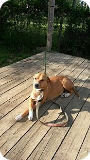 Shepherd (Unknown Type) Mix Dog for adoption in Havana, Florida - Sunny