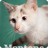 Adopt A Pet :: Montana - Salem, OH