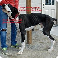 Adopt A Pet :: Buddy - Pearl River, NY