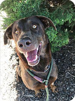 Mixed Breed (Large) Mix Dog for adoption in Meridian, Idaho - Hunter
