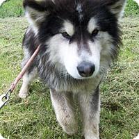 Adopt A Pet :: Denzel - Augusta County, VA