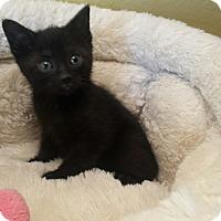 Adopt A Pet :: Blair - Chelsea - Kalamazoo, MI