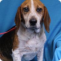 Adopt A Pet :: Driver - Minneapolis, MN