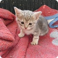 Adopt A Pet :: Natasha - Louisville, KY