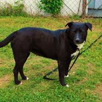 Adopt A Pet :: Chanda - 021512k - Tupelo, MS